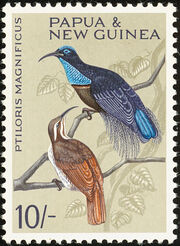 Papua New Guinea 1964 Birds e