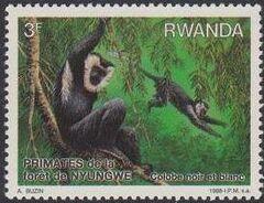 Rwanda 1988 Primates of Nyungwe Forest b