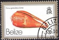 Belize 1980 Shells and Sea Snails j