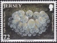 Jersey 2011 Jersey Marine Life IX - Sea Squirts and Sponges e