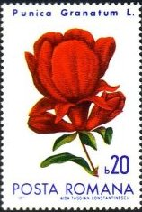 Romania 1971 Flowers from Botanical Garden a