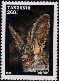Tanzania 1995 Bats f