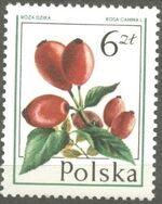 Poland 1977 Forest Fruits g