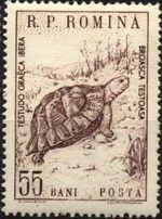 Romania 1960 Romanian fauna b