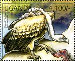 Uganda 2012 Fauna of African Great Lakes Region - Birds of Prey - Western Marsh Harrier d