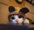 CAT IN THE HAT LOL