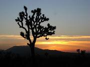 Desert Sunset 4