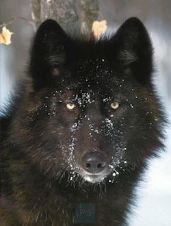 File:Sweet Fur Amy.jpg