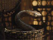 Jumanji-2017-Snake