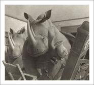 Jumanji Book Rhinos