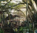 Parrish Treehouse