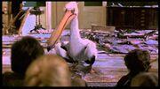 Jumanji Pelican Game