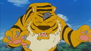 Rock hits Shere Khan in the Forehead