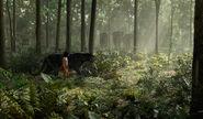 Mowgli & Bagheera