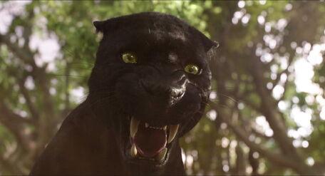 Bagheera Jungle Book Wiki Fandom Powered By Wikia