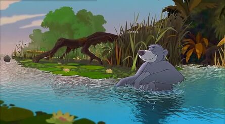 Baloo The Bear in the water