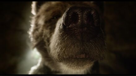 Baloo Sniffing out Mowgli