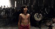 Mowgli & Bandar Log