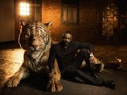 The-Jungle-Book-Special-Shoot-SHERE-KHAN