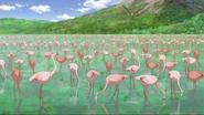 JEL Flamingos
