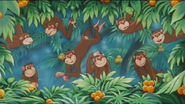 Jungle-emperor-leo-Monkeys