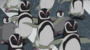 JEL Penguins