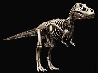 Tyrannosaurus rex skeleton by airt-d39cpb6