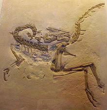 220px-Compsognathus longipes cast2