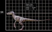 Raptormale5ab2nr
