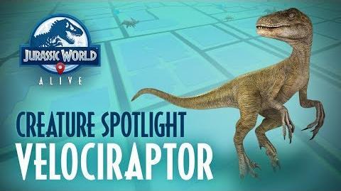 Creature Spotlight - Velociraptor