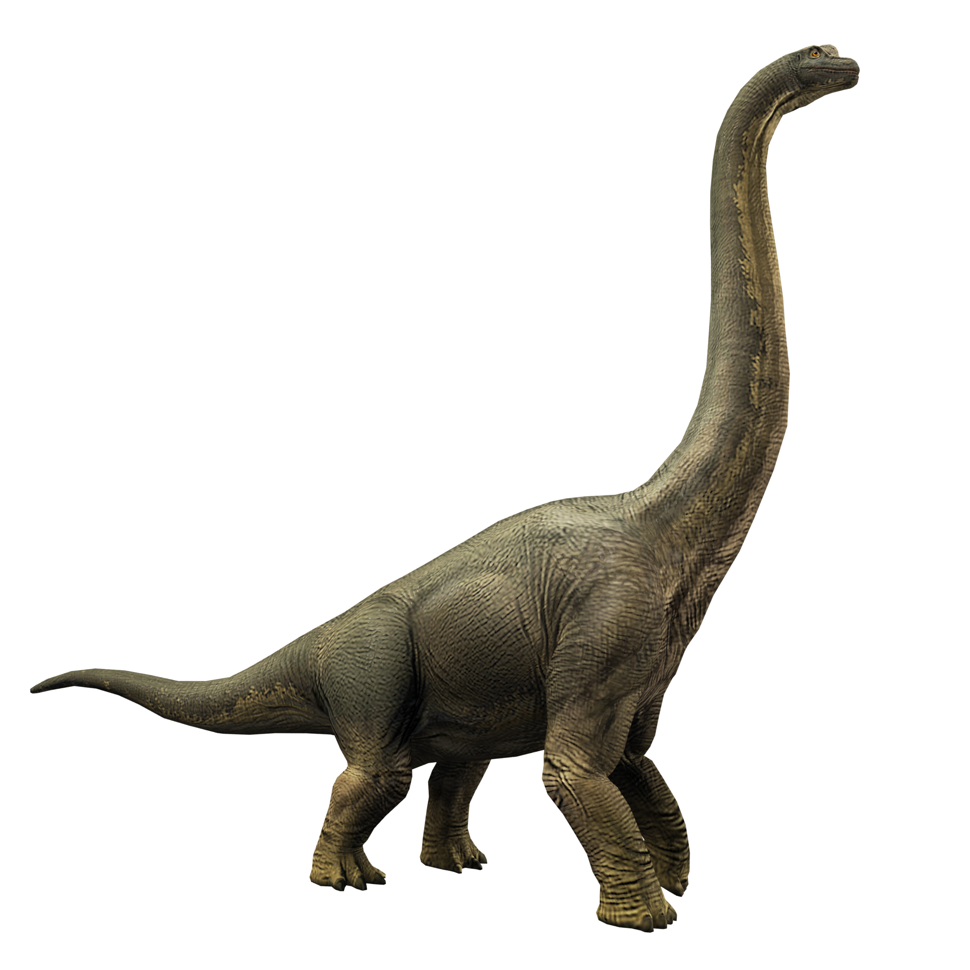 brachiosaurus  jurassic world alive wiki  fandom powered
