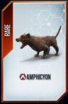 Amphicyon card