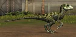 Velociraptor 11-20
