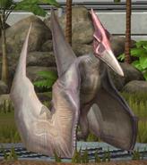 Pteranodon LVL10