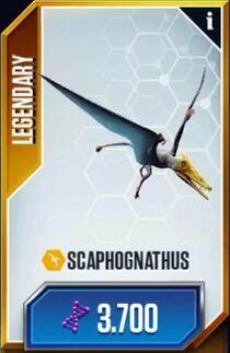 Scaphognathuscard