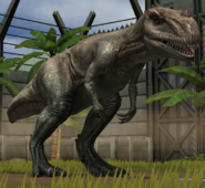 Ceratosaurus Lvl10