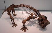 Lystrosaurus 1 s