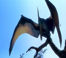 Pteranodon jplw