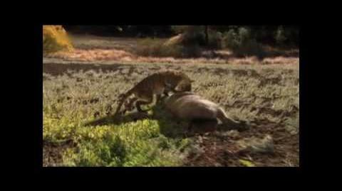Prähistorisches Raubtier - Killerschwein Teil 3 5