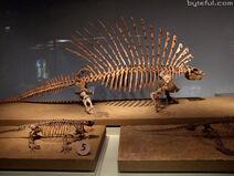 Edaphosaurus fossil