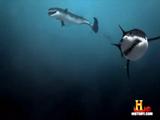 Deep Sea Killers (episode)