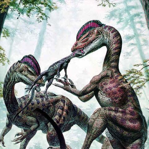 Zwei <i>Dilophosaurier</i> bei der Jagd.