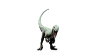 Jurassic world delta raptor by camo flauge dcslkwd-fullview