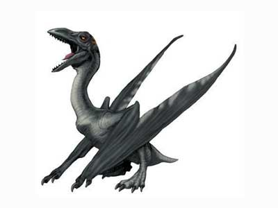 Dc card pterodactylus big