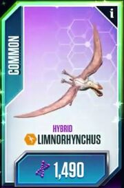Imnorhynchus