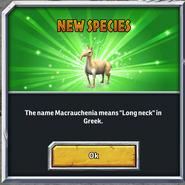 Macrauchenia-Net