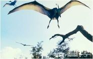 Pteranodon flying