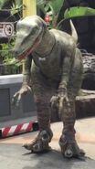 Raptor Tango