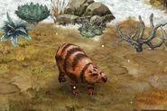 Diprotodon 29
