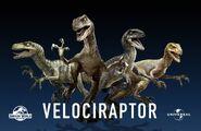 Luis-carrasco-raptors-2low-1600x1041